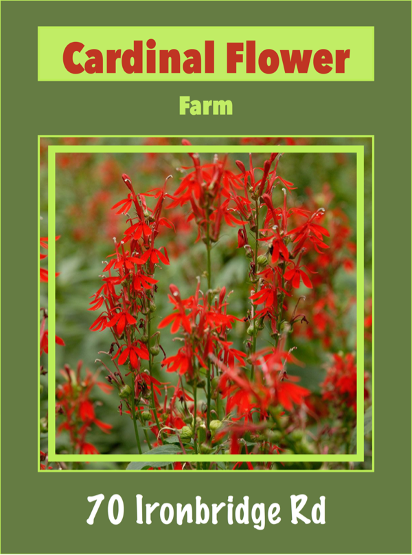 CARDINAL FLOWER FARM